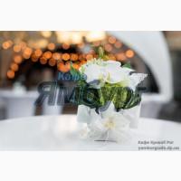 Кафе кривого рога на свадьбу