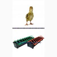 Перепелиная кормушка для взрослой птицы и цыплят