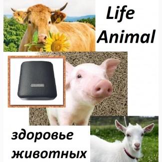 Лечение кошки, собаки, коровы устройством Life Animal
